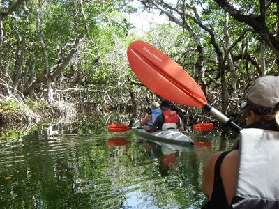 Key Largo cottage rental - Go on an adventure, experience our Mangrove Jungle Kayaking Tour...