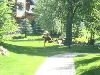 Steamboat Springs condo photo - Wildlife seen around the Pines!