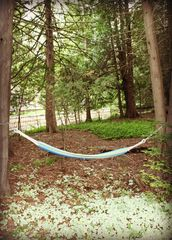 Indian River house photo - Hammock by the rivers edge, on 150 feet of pristine Sturgeon River frontage.