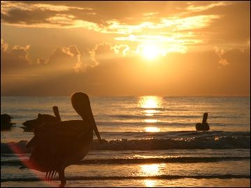 Sunset with Pelicans