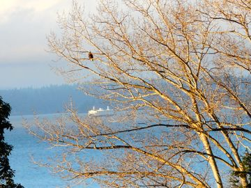 Magnolia house rental - SeaEscape, Watch the eagles and marine traffic from your Seattle vacation home.