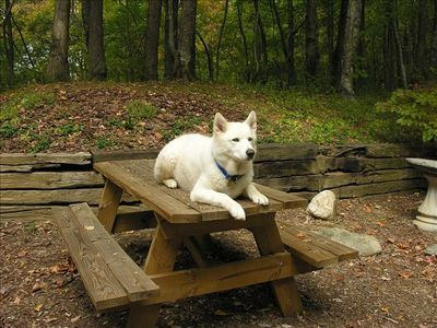Your well-behaved pet is welcome at Wesser Heights Cabin!