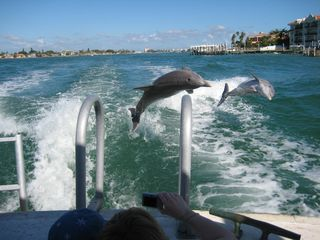 Madeira Beach condo photo - Enjoy local dolphin tours.