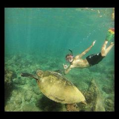 Maalaea condo photo - Swim with a green sea turtle like my son is in this picture.
