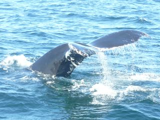 Yarmouth house photo - See the whales up close! April-Oct Whale watch tours offer guaranteed sightings!