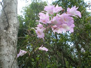 Lubbers Quarters Cay cottage photo - Wild orchids in the tropical hammock in summertime