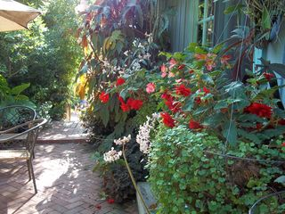 Santa Barbara studio photo - Our secret garden nice for coffee, or wine tasting relaxing place!