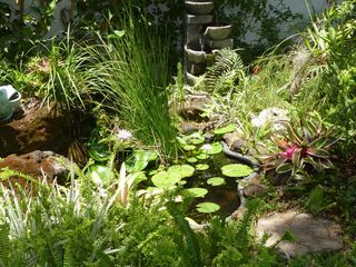 Princeville house photo - Close-Up of Our Fishpond