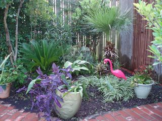 Folly Beach house photo - WILD FLAMINGO IN COURTYARD