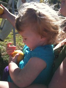 Granddaughter picking peaches with her David and Joanne