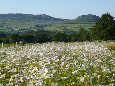 Wildflower Meadow and The Roaches in Peak Park