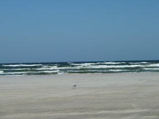 North Padre Island condo photo - The beach just steps away!!
