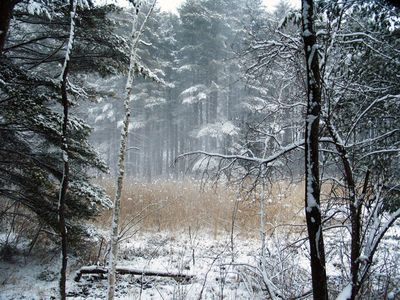 The Winter view of the Nature Conservancy Lands that surround our house