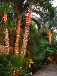 During the Holiday season the palms by the pool are lit with holiday lights!