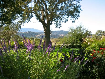Main Ranch House view of  valley oak garden. Santa Ynez Mts beyond