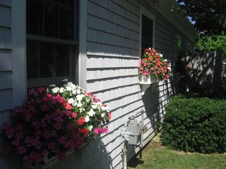 Brewster cottage photo - Cape Cod flower boxes