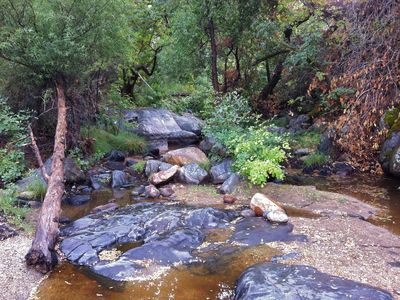 Three Rivers cottage rental - Grouse Creek. Turtles, Frogs, Hawks, Herons, Owls, Snakes, Coyotes, Deer.....