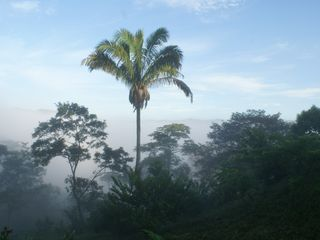 "Nicoya house photo - View from Casa las Nubes, ""House in the Clouds at dawn"