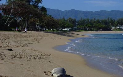Nice area to walk you may even see a Hawaiian Monk Seal on your Beach