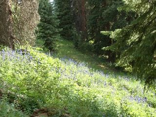 Ouray house photo - Wild flowers.