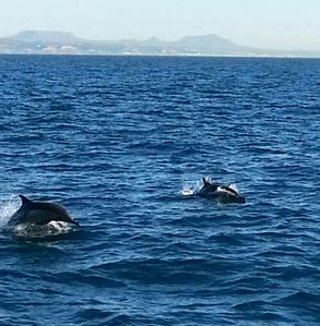 A pod of dolphins off our port side on a cruise