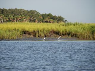 Daufuskie Island cottage photo - Marsh and snowy egrets surrounding the inlets of Daufuskie