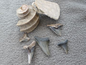 Fossils Galore