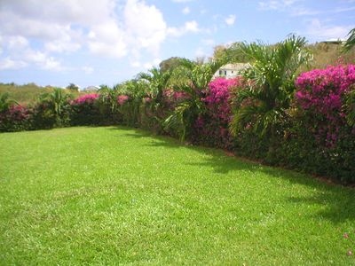 Lawn and Tropical Gardens