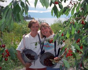 Somers house photo - Picking the famous Flathead Lake cherries