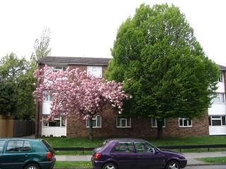 Bromley apartment rental - Our apartment is behind the cherry tree