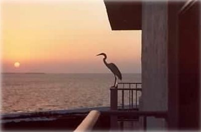 Breathtaking Sanibel Island & Sunset view from your 8th floor Balcony!