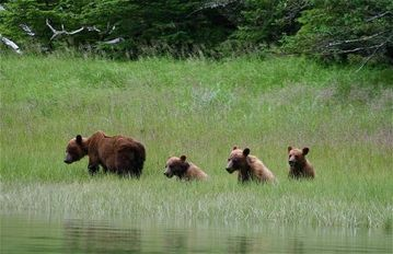 Family of bears in Moose Meadow just 2 blocks from condo