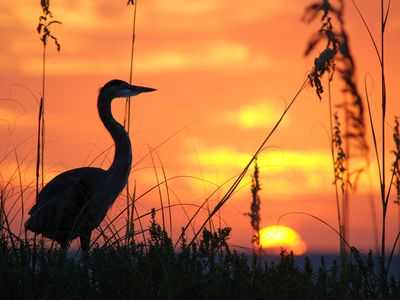 The most beautiful sunsets on the West Coast of Florida. Nature at it's Best!