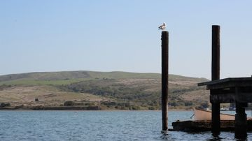 The dock on Tomales Bay. Seagulls included. Boat not included.