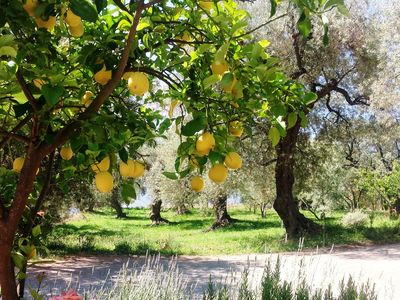 Secluded, beautiful Cortijo,private Pool,in Organic Olive Grove,magnificent view
