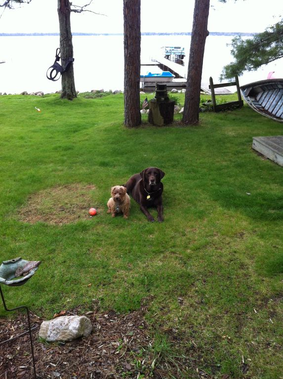 Bently and Bosch welcome well behaved dog friends to the lake!