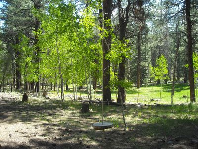 Great wooded lot - pines and aspens