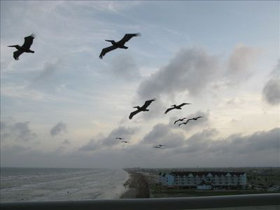Galveston condo rental - Perfect wind current by the balcony creates plenty of pelican flybys!
