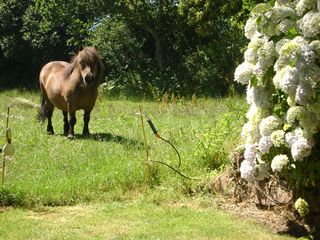 Perros-Guirec cottage photo - Eos, Mom´s Farm´s pony