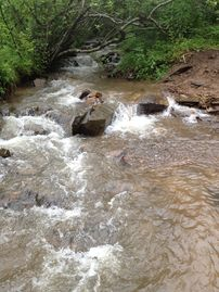 Bryson City house rental - Our CREEK runs over 400 on front of property!!