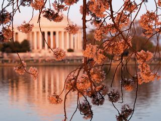 Woodley Park condo photo - Jefferson Memorial