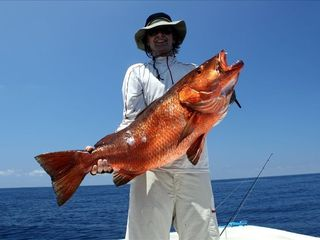 Drake Bay cottage photo - Red snapper are one of 50 species