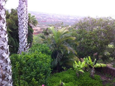 Maunaloa estate rental - View of garden and Mango fruit trees