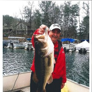 14 pound bass caught by lake arrowhead resident this year by our home.