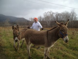 Ascutney farmhouse photo - Molly and Summer, the High Shelter donkeys