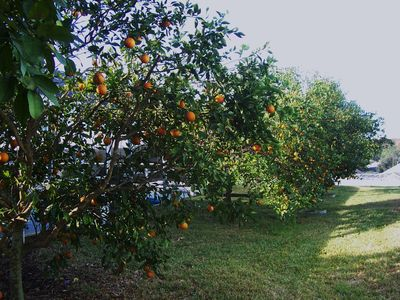 Fruit Trees in Garden