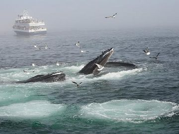 Whale watching: Barnstable Harbor is less than 35 minutes from Falmouth.