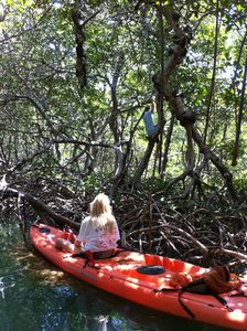 Exploring through the mangrove tunnels