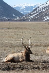 The refuge is home to an average of 7,500 elk during the winter months.