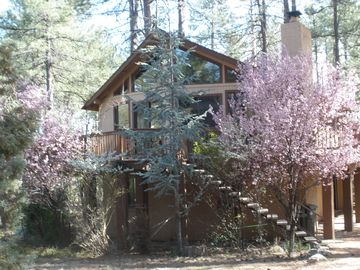 Pine cabin rental - Stoney Hollow in the spring.